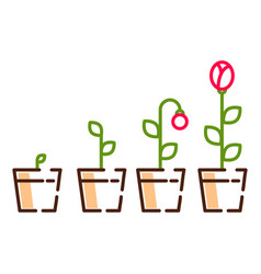 plant flower growth process line icons vector image