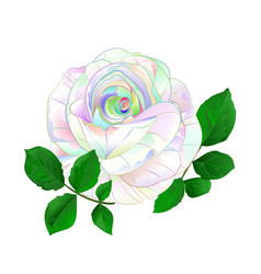 rose multicolored simple stem with leaves vector image