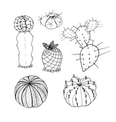 set of cactus hand drawn botanical art vector image