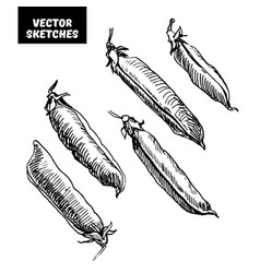 set of sketches vector image