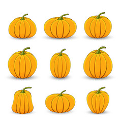 set pumpkins in different sizes and shapes on a vector image