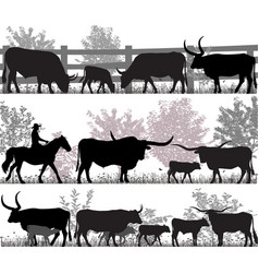 Texas longhorn cattle vector