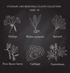vintage collection hand drawn medical herbs and vector image