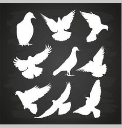 White dove silhouette set on blackboard vector