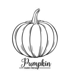 hand drawn pumpkin icon vector image vector image