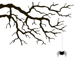 branch and spider vector image
