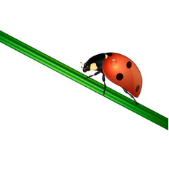 background with realistic ladybug insect on vector image