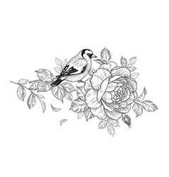 Hand drawn goldfinch sitting on rose branch vector