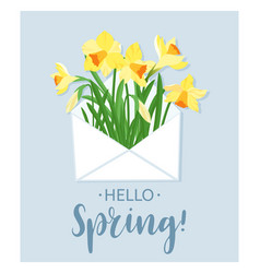 hello spring yellow daffodils in white envelope vector image