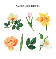 Leaves and floral watercolor elements set hand vector