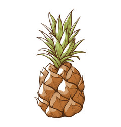 pineapple fresh sweet whole fruit tasty vitamin vector image