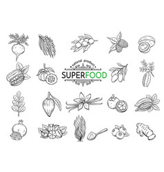 Sketch superfood icons set vector