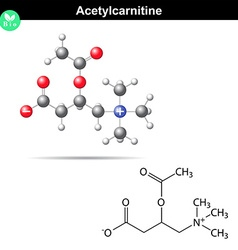 Acetylcarnitine formula vector