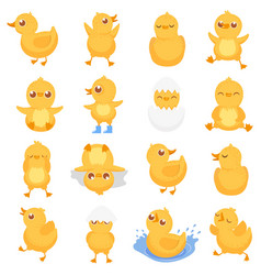 yellow duckling cute duck chick little ducks and vector image