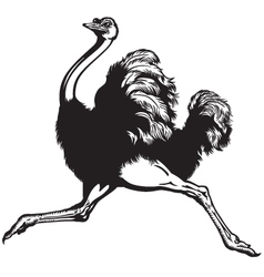 ostrich black white vector image vector image