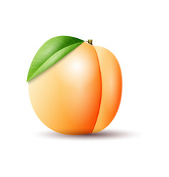 Apricot on white background vector