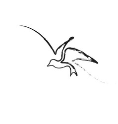 continuous line bird vector image