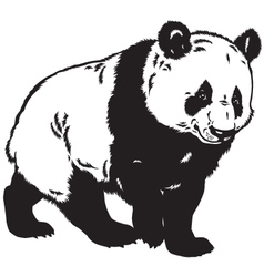 Panda black white vector