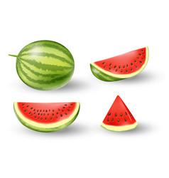 Realistic fresh watermelon set juicy watermelon vector