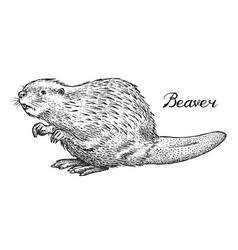 river beaver wild animal symbol north and vector image