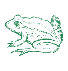 Toad side view vector