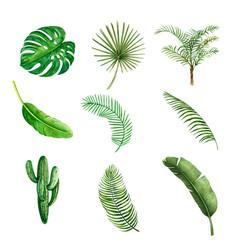 Tropical plant watercolor creative element vector