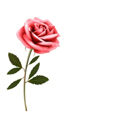Flower background with a pink rose vector
