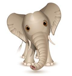 little elephant vector image