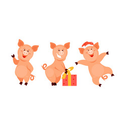 christmas pigs vector image