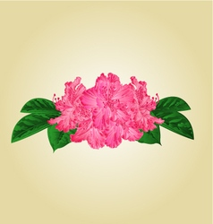 Festive bouquet pink rhododendrons vector