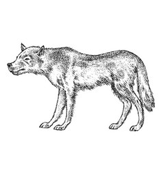 gray wolf wild animal symbol north and vector image