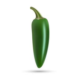 Natural hoti pepper vector
