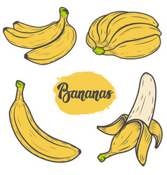 set of colorful hand drawn banana design vector image