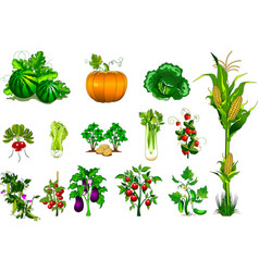 collection of vegetables and berries vector image
