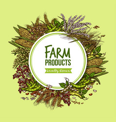 Cereal vegetable and bean farm product poster vector
