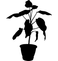Dieffenbachia the potted plant vector