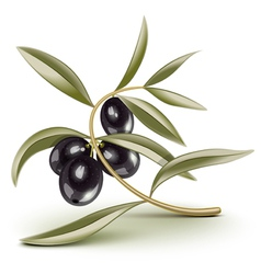 Olive branch black vector