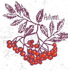 Rowanberry ink hand drawn card vector