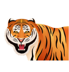 Tiger on white background wild cat vector