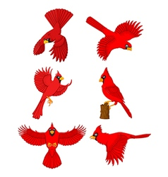 Cardinal cartoon set vector