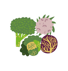different cabbage varieties fresh vegetable vector image