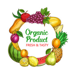 fresh fruits sketch round frame banner vector image