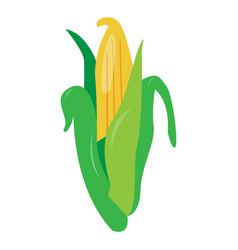 Isolated corn vector