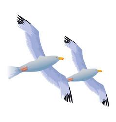 Seagulls birds flying cartoon vector
