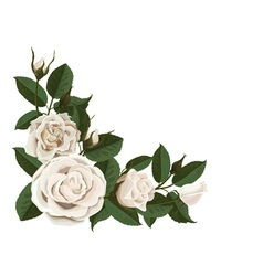 White rose buds and green leaves in the corner vector
