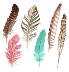 colorful feather hand drawn collection vector image