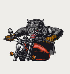 Angry wolf motorcyclist riding motorbike vector
