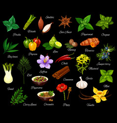 cooking seasonings herbs and spices vector image