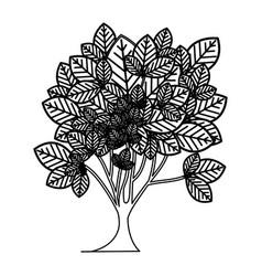 Sketch silhouette leafy tree plant vector