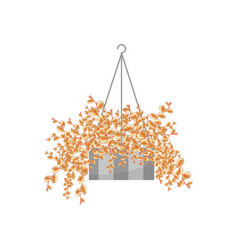 Bonsai house plant realistic icon for interior vector